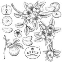 elementos dibujados a mano de fruta de manzana. vector
