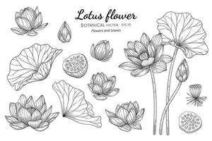 Set of Lotus flower and leaf hand drawn botanical illustration with line art on white backgrounds vector