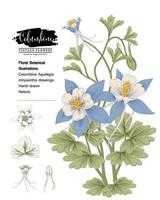 Columbine flower Hand Drawn Botanical Illustrations. vector