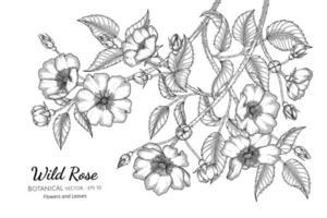 Ilustración botánica dibujada a mano de flores y hojas de rosas silvestres con arte lineal sobre fondo blanco