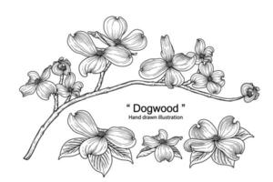 dibujos de flores de cornejo. vector