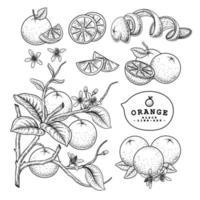 elementos de ilustración dibujados a mano de fruta naranja. vector