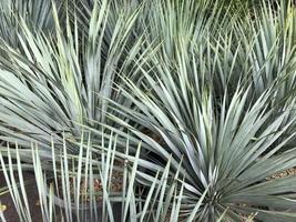 plantas tropicales puntiagudas foto