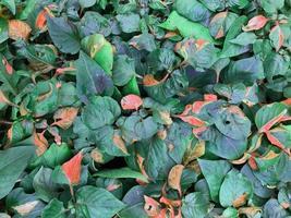 hojas rojas y verdes