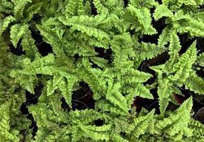 pequeños helechos verdes