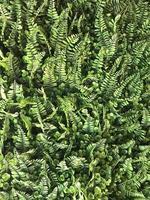 hojas de helecho verde foto