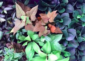 grupo mixto de hojas