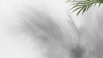 Palm leaf and shadows