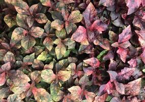 hojas verdes y amarillas afuera
