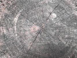 Wooden stump texture photo