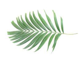 Lush palm leaf photo