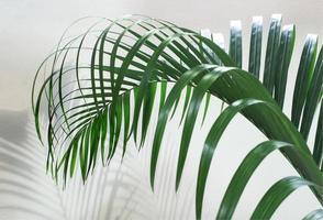 Palm leaf close-up photo