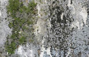 superficie cubierta de musgo ruff foto