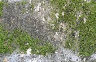 superficie de la roca cubierta de musgo foto