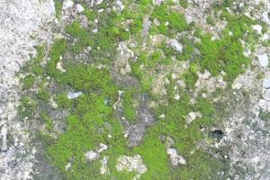 musgo verde en piedra