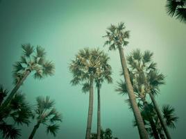 palmeras con edición vintage