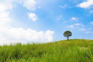 árbol en la colina