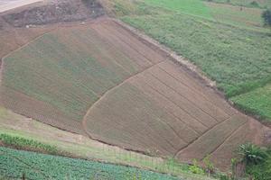 granjas en las montañas en tailandia