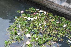 Garbage and weeds in the river in Bangkok