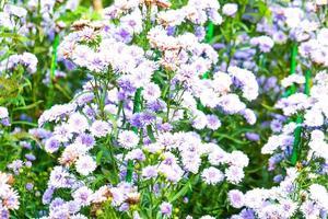flores blancas y azules en el parque