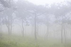 niebla en la montaña por la mañana