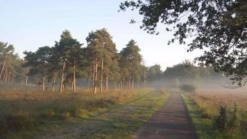 am frühen Morgen auf einem Radweg in der Natur