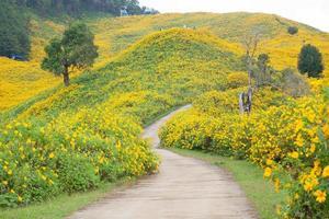 Road among flower fields