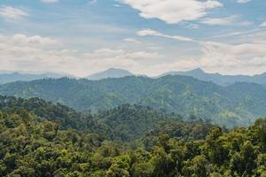 bosque en las montañas