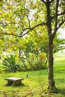 banco debajo de un árbol