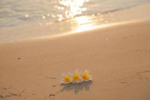 flor en la arena de la playa foto