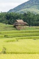 House by the rice fields