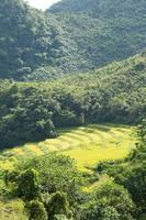 granja de arroz en la montaña en tailandia foto