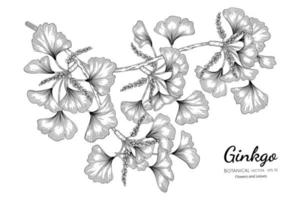 Ginkgo hand drawn botanical illustration with line art on white background vector