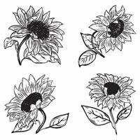 Set of sunflowers illustration vector