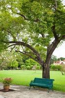 banco debajo de un árbol foto