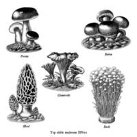 Antique engraving illustration of top edible mushroom collection hand drawn black and white art isolated on white background vector
