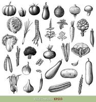 Vegetables collection hand draw engraving vintage style black and white art isolated on white background vector