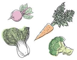 Simple black four kinds of vegetable line art painting. vector