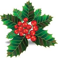Beautiful holly christmas branch and berry. Vector illustration.