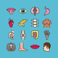 Educational body parts and organs icon set vector