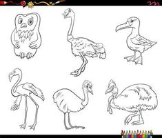 cartoon birds animal characters set coloring book page vector