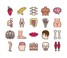 Educational body parts and organs icon set