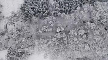 Aerial Top Down View of Snowy Trees and Creek in 4K video