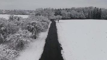 Aerial View of Snowy Trees Among Road in 4K
