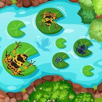 Aerial scene with exotic frogs and lotus leaves in the pond vector
