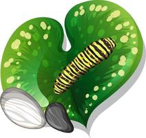 Top view of caterpillar on a leaf isolated vector