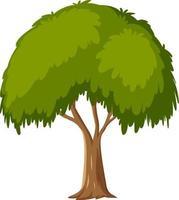 árbol aislado sobre fondo blanco vector