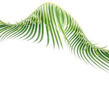 Curved green leaf photo