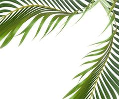 Green leaf frame on white photo