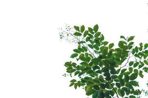 hojas verdes sobre fondo blanco foto